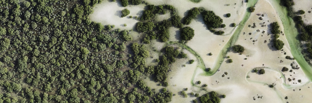 Mapping Mangroves