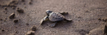 sea-turtle-356125_1920-cropped2