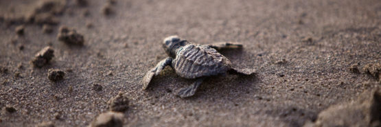 The Valuable and Interesting Lives of Sea Turtles