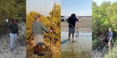 Coastal ecosystems of mangrove