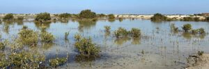 Mangrove Mapping and Management Expertise