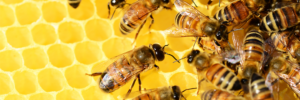 World Bee Day </br>2021