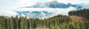 World Environment Day 2021: </br>Ecosystem Restoration