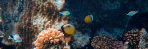 Environmental Impacts of Dredging on Coral Reefs