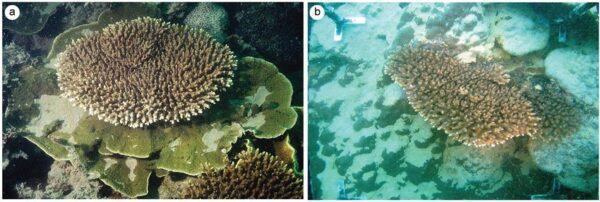 Dredging-affect-Coral-Reefs
