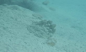 Sedimentation of Corals